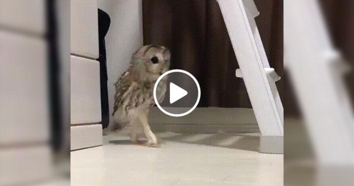 VIDEO: När man ljudlöst smyger ut i köket för att ta sig en nattmacka
