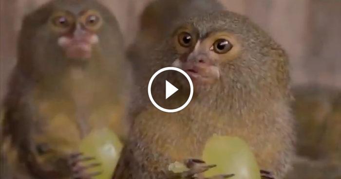 VIDEO: När det finns gratis fika i lunchrummet på jobbet