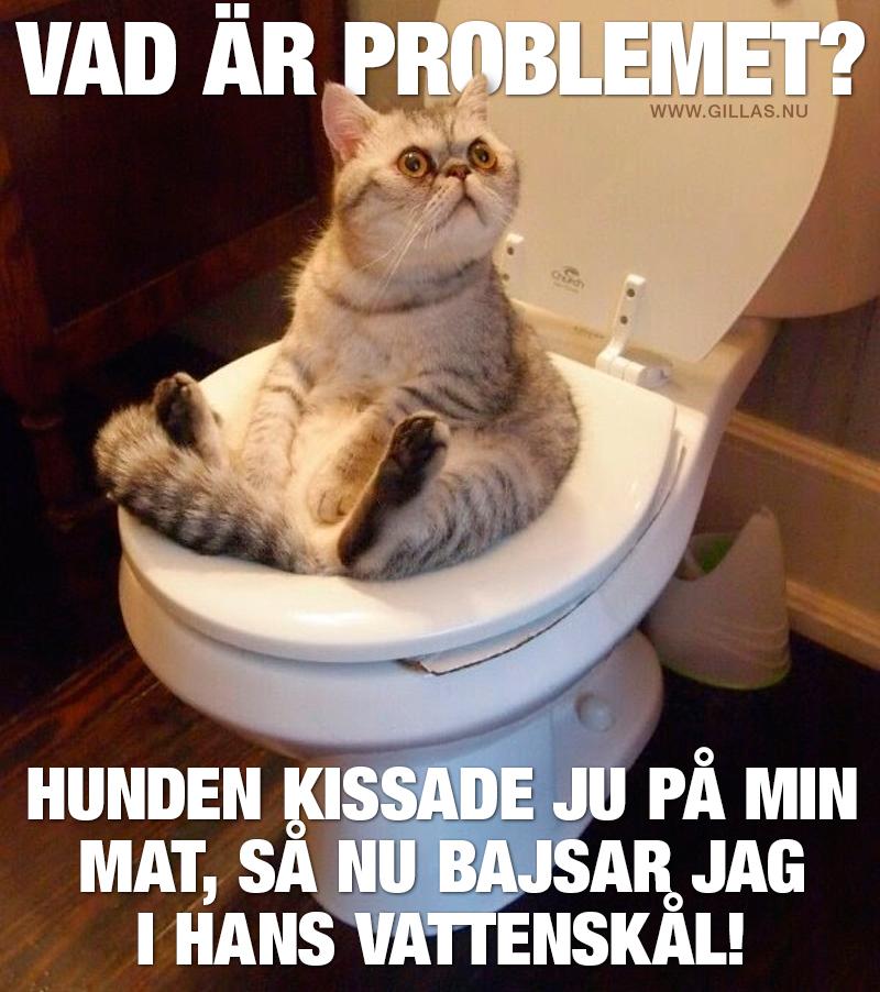Katt sitter på toalett