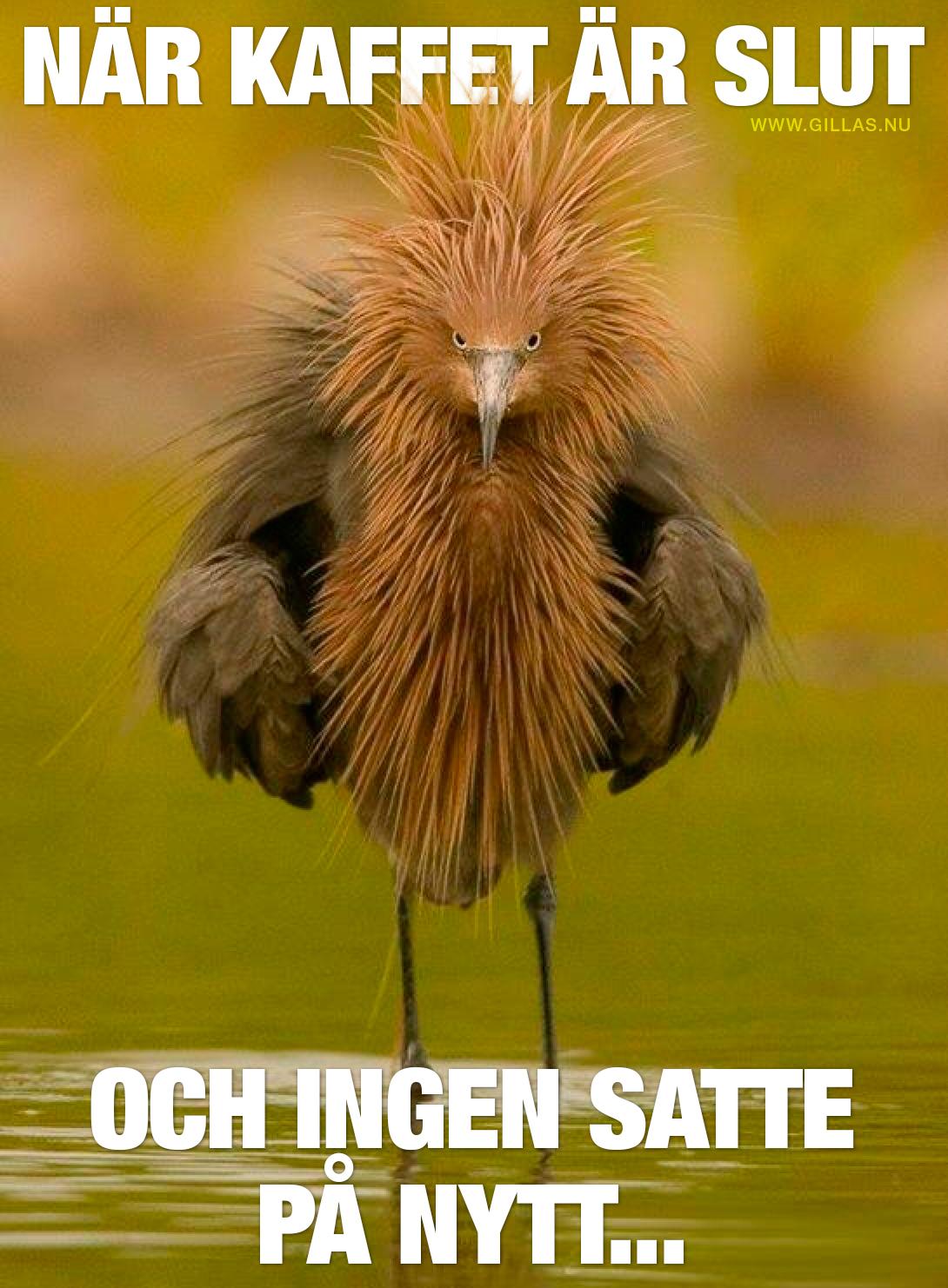 Fågel med arg uppsyn