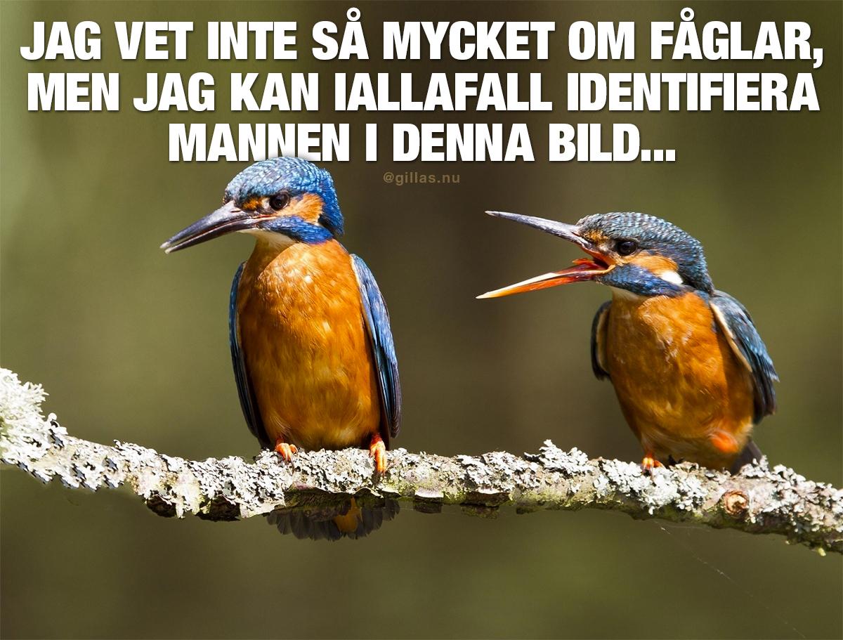 Två fåglar på en gren