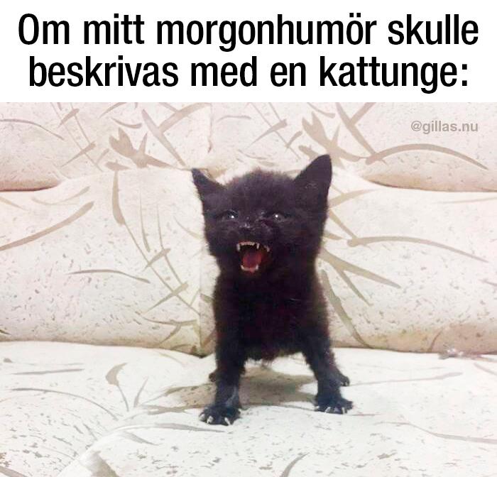 Även söta katter har vassa tänder