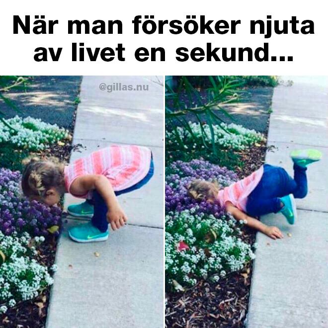 Barn som luktar på blommor och trillar i rabatten