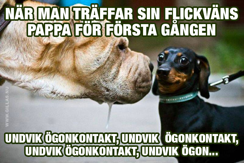 Stirrig hund
