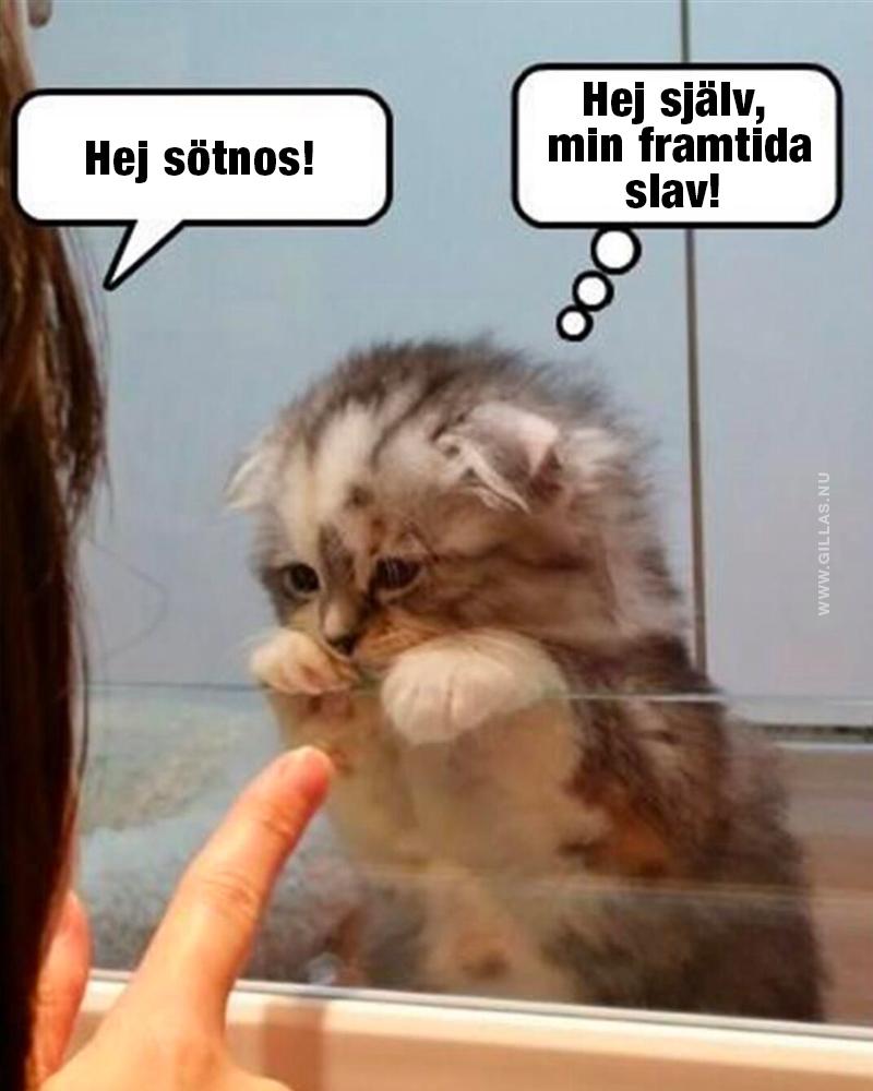Människa möter sin katt för första gången