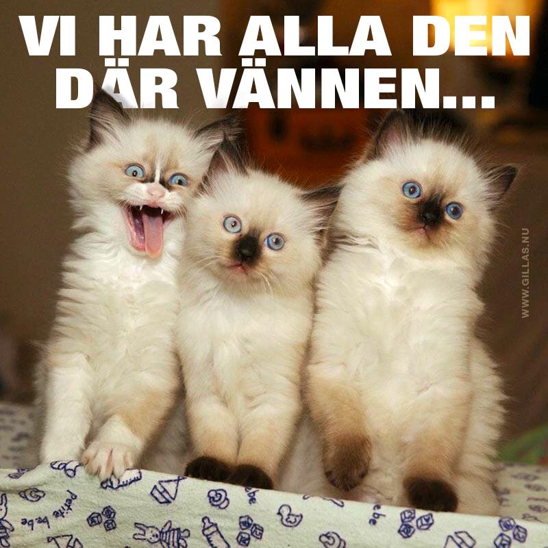 Tre katter, varav en gör en lustig min