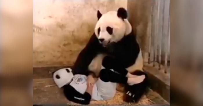 VIDEO: Se pandans obetalbara reaktion som fått hela världen att skratta!