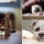 Vad kan vara bättre än roliga bilder med söta hundar och katter? Inget, tycker vi!