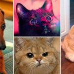 Tio roliga djurbilder som du antagligen kan relatera till!