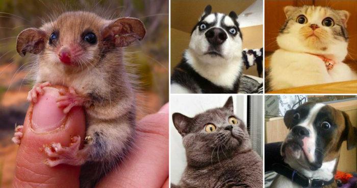 Tio härligt roliga bilder som garanterat kommer göra din dag lite bättre