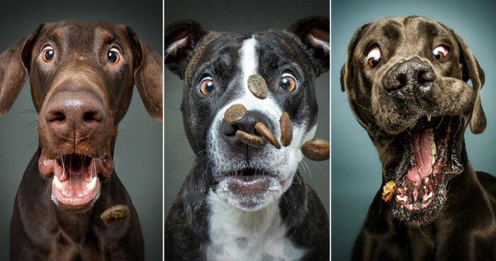 20 underbara ansiktsuttryck på hundar som försöker fånga godsaker i luften