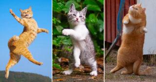 Tjugo roliga bilder som bevisar att katter är mästare på att dansa!