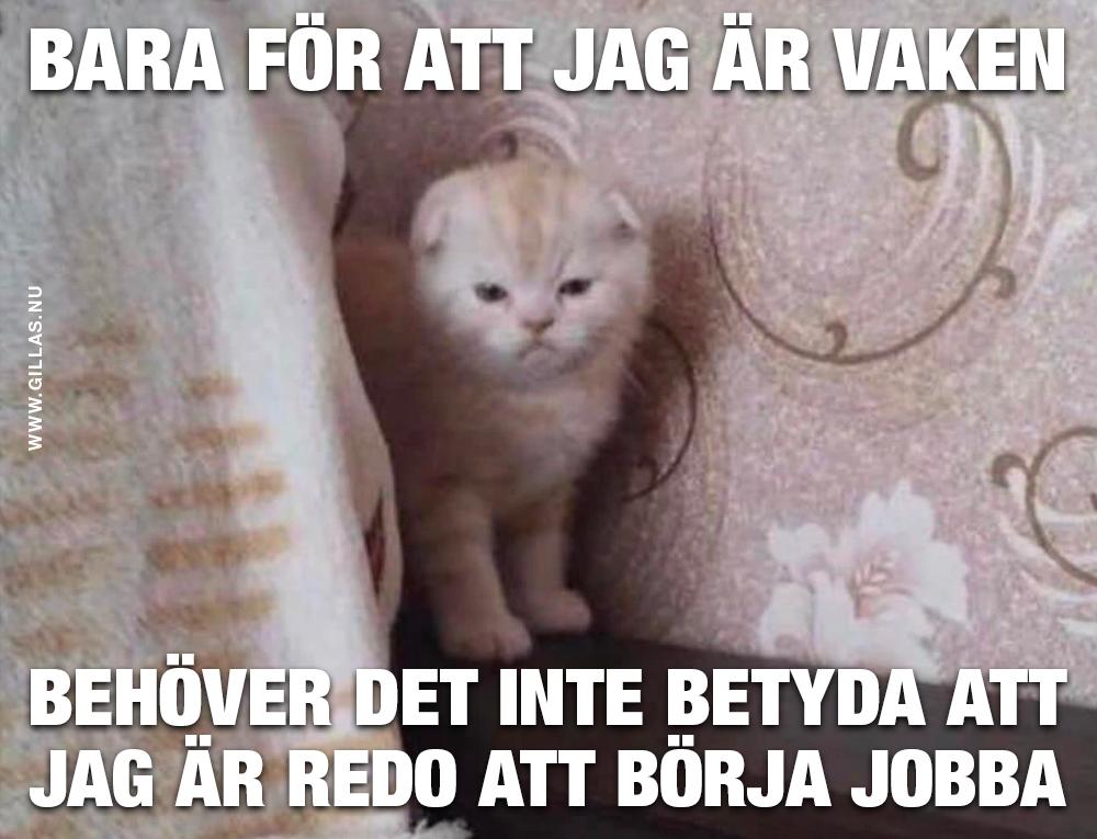 Trött kattunge