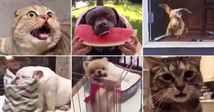 VIDEO: Se och hör hur det skulle låta om djur hade sina egna soundtracks