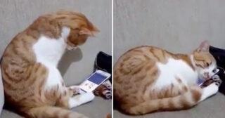 VIDEO: Katt ser sin människa som dog för flera år sedan och dess vackra reaktion rör oss till tårar