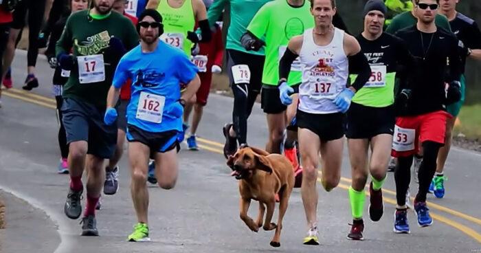 Hund råkar springa en halvmara efter att ha blivit utsläppt för att kissa – slutar sjua