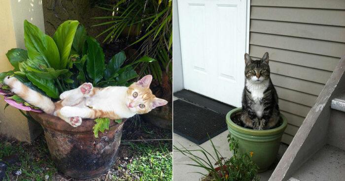 Nitton kattplantor som du antagligen inte borde vattna