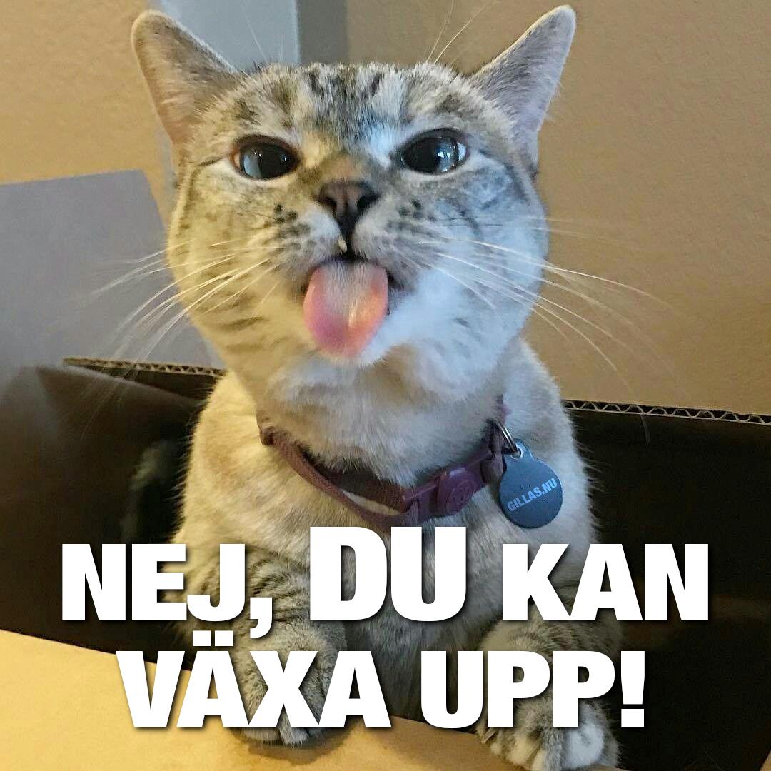Katt räcker ut tungan