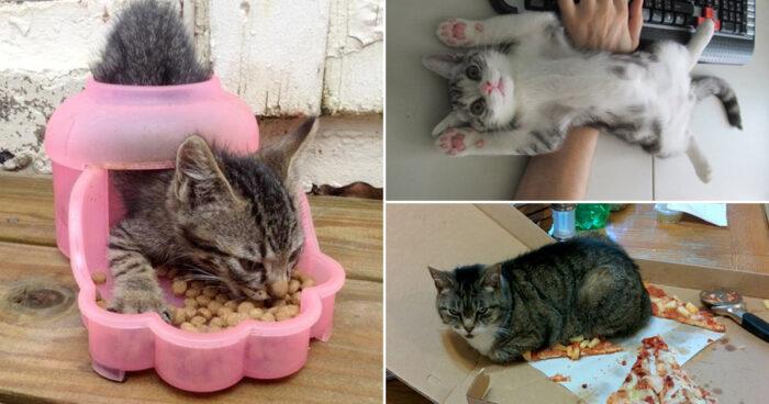 19 härliga bilder som bevisar att katter gör precis vad de vill!