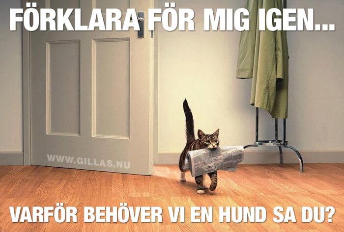 Katter planerar att göra hundar överflödiga