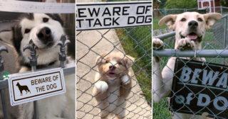 """Fjorton bilder på """"livsfarliga"""" hundar bakom sina varningsskyltar"""