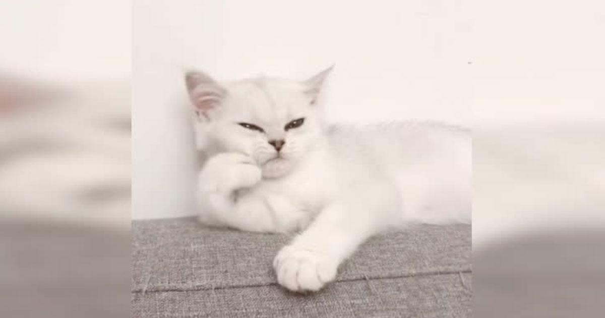 Trött katt med tass mot kind