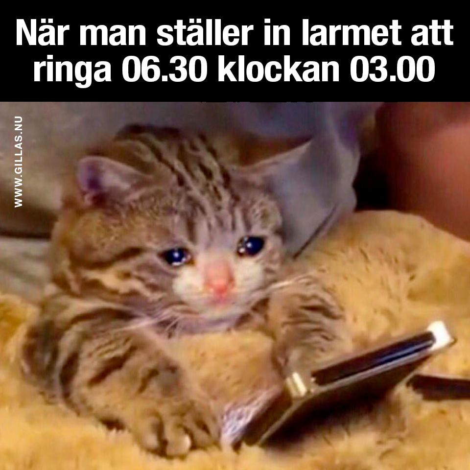 Trött kattunge med mobil