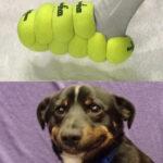 Alla hundar har drömt om den här skon