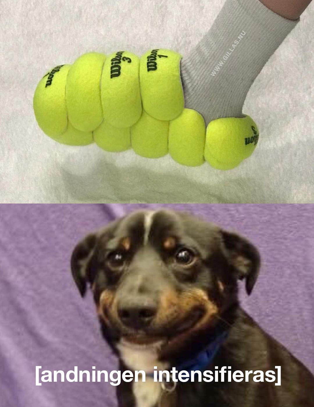 Hund ser tennissko gjord av tennisbollar