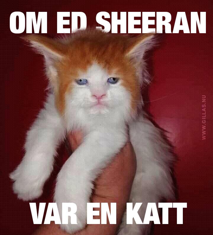 Katt som ser ut som Ed Sheeran