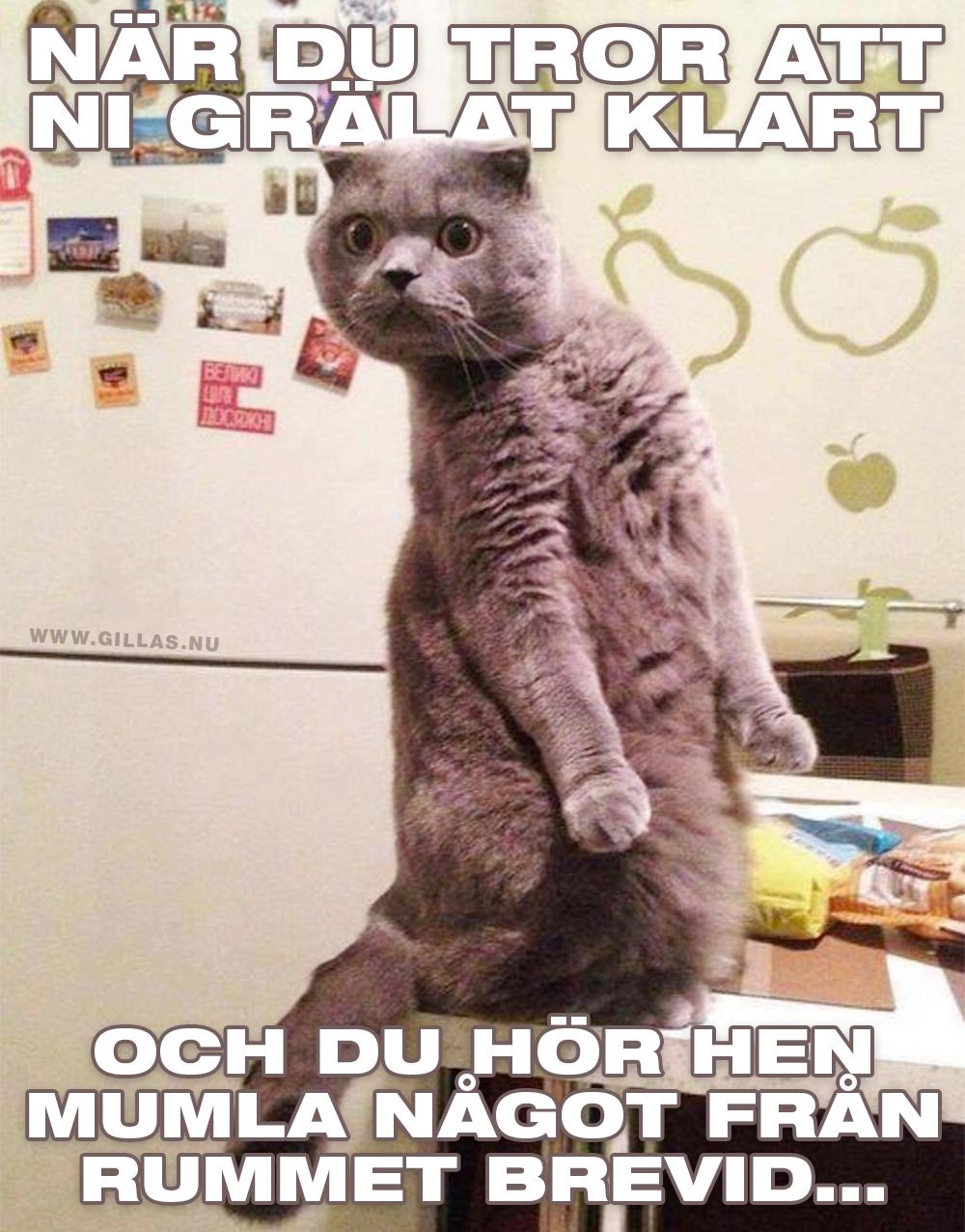 Arg katt på två ben