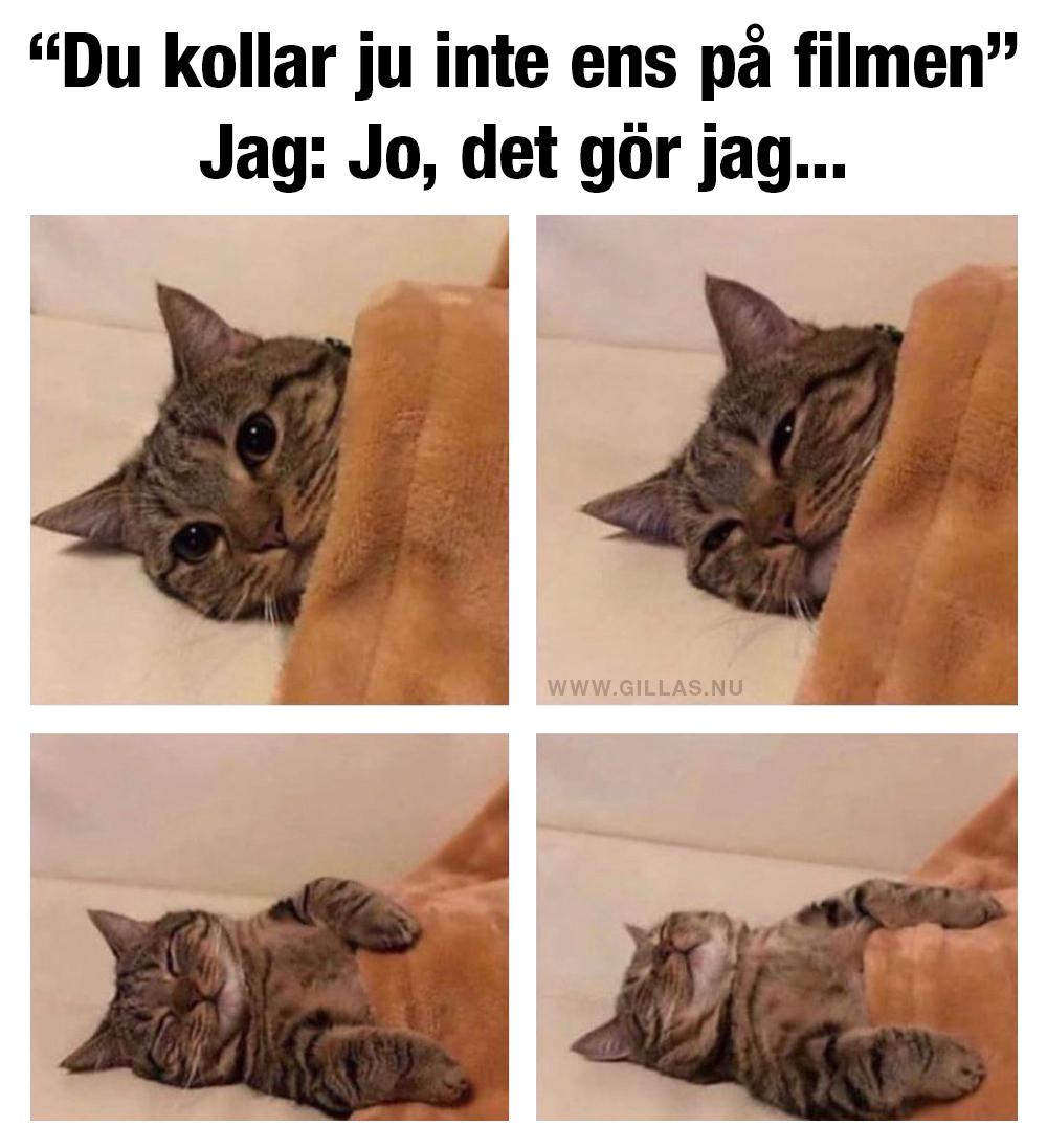 Trött katt