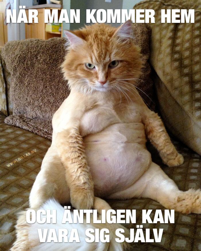 Den här katten är mitt andedjur