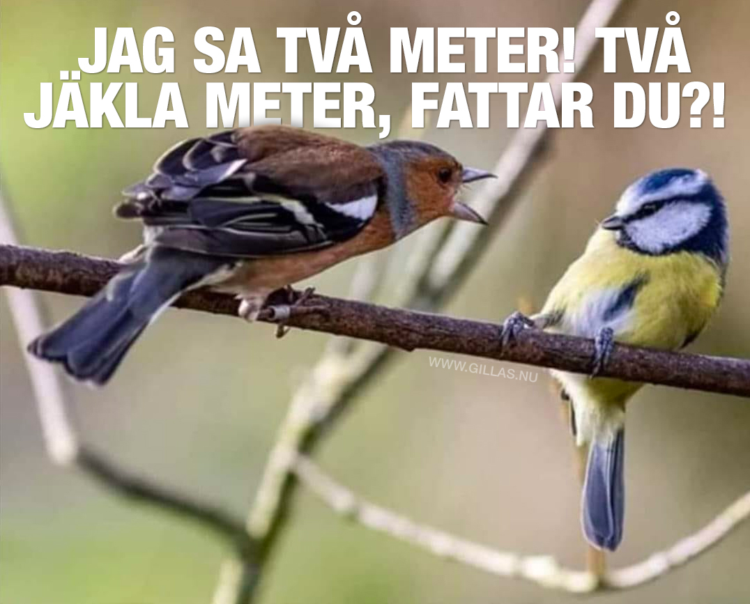 En fågel skäller på en annan