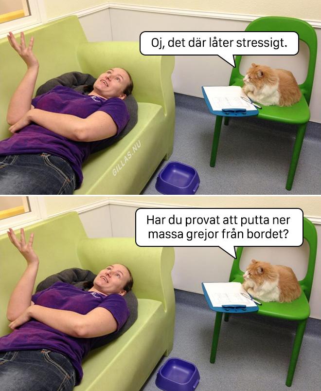 Om katter vore psykologer