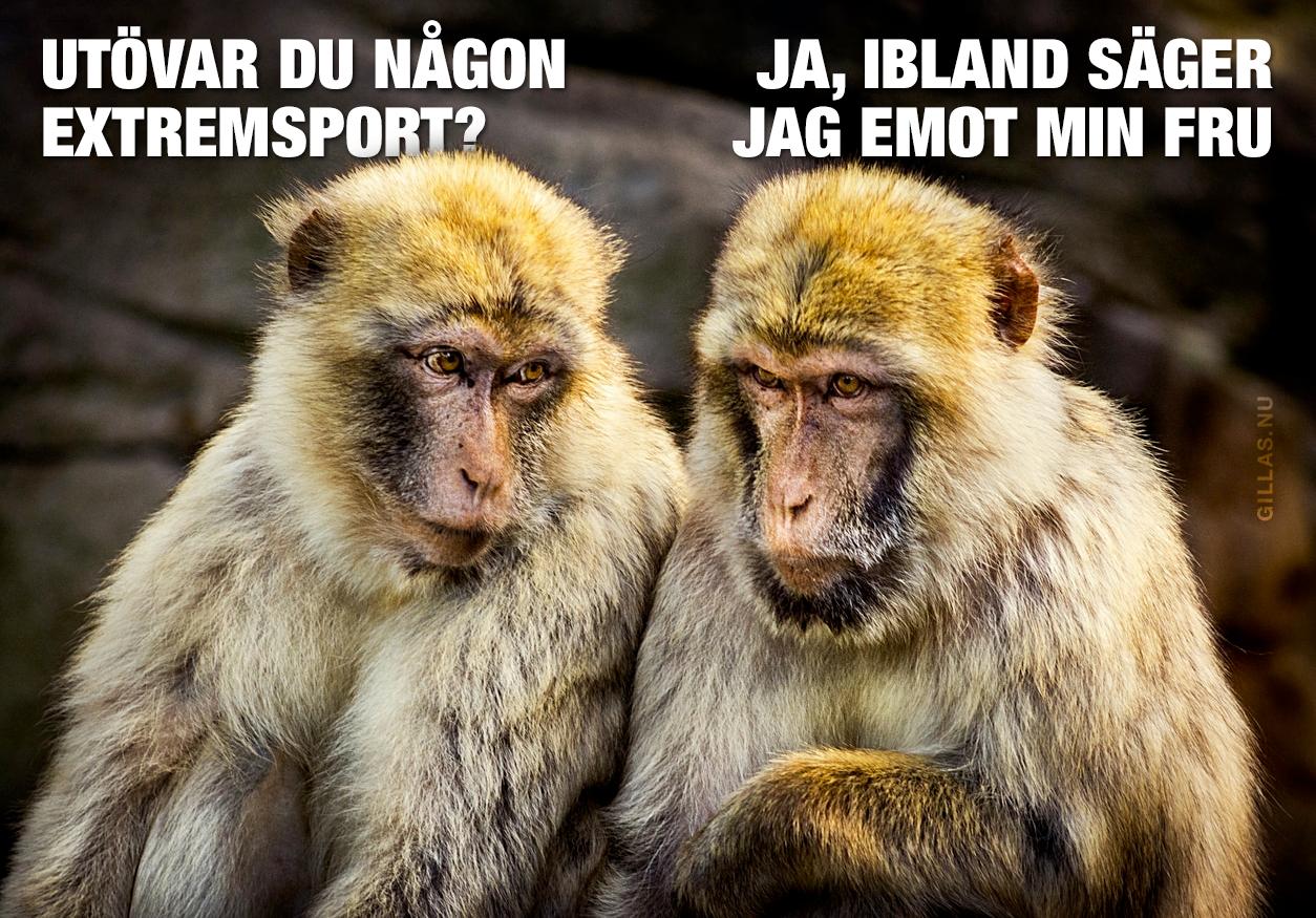 Två apor pratar