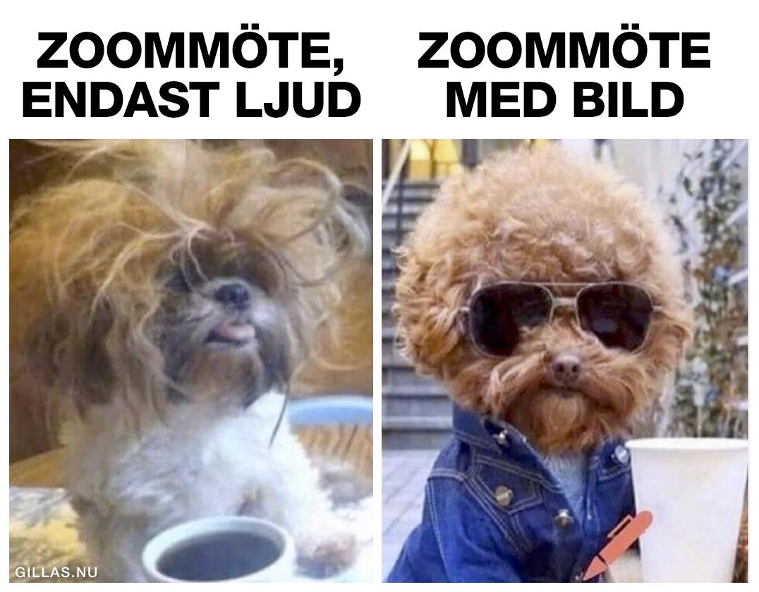 Trött hund och cool hund
